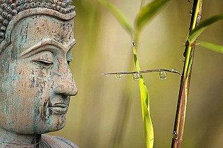 Buddha statues for wellness