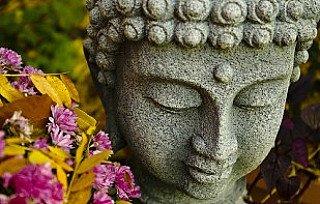 hair-of-the-buddha
